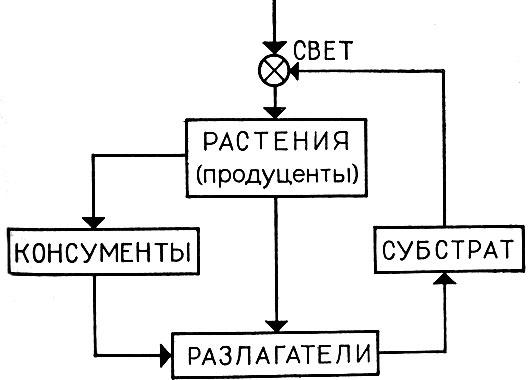 Блок-схема потоков массы и